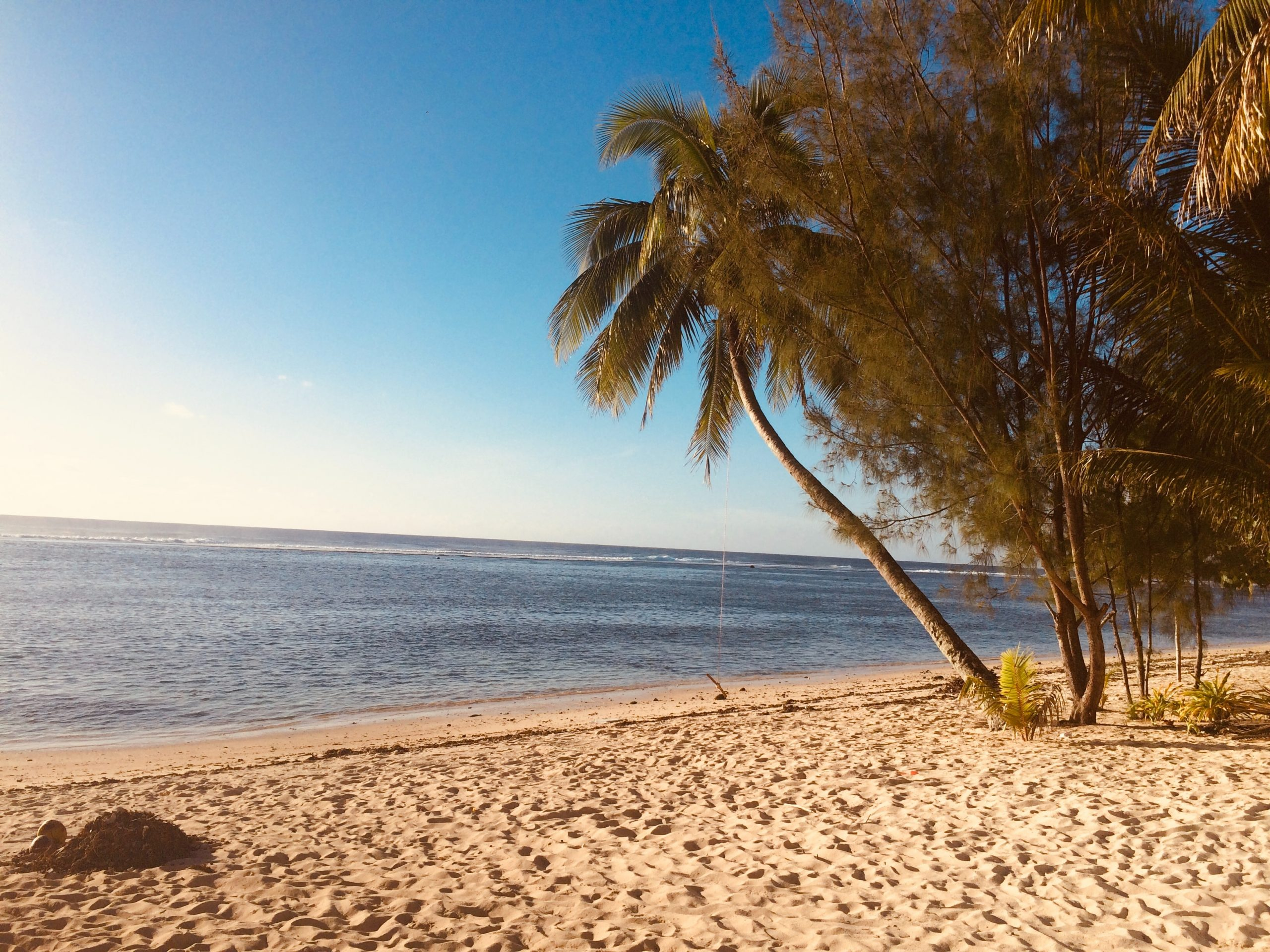 green palm tree on beach during daytime