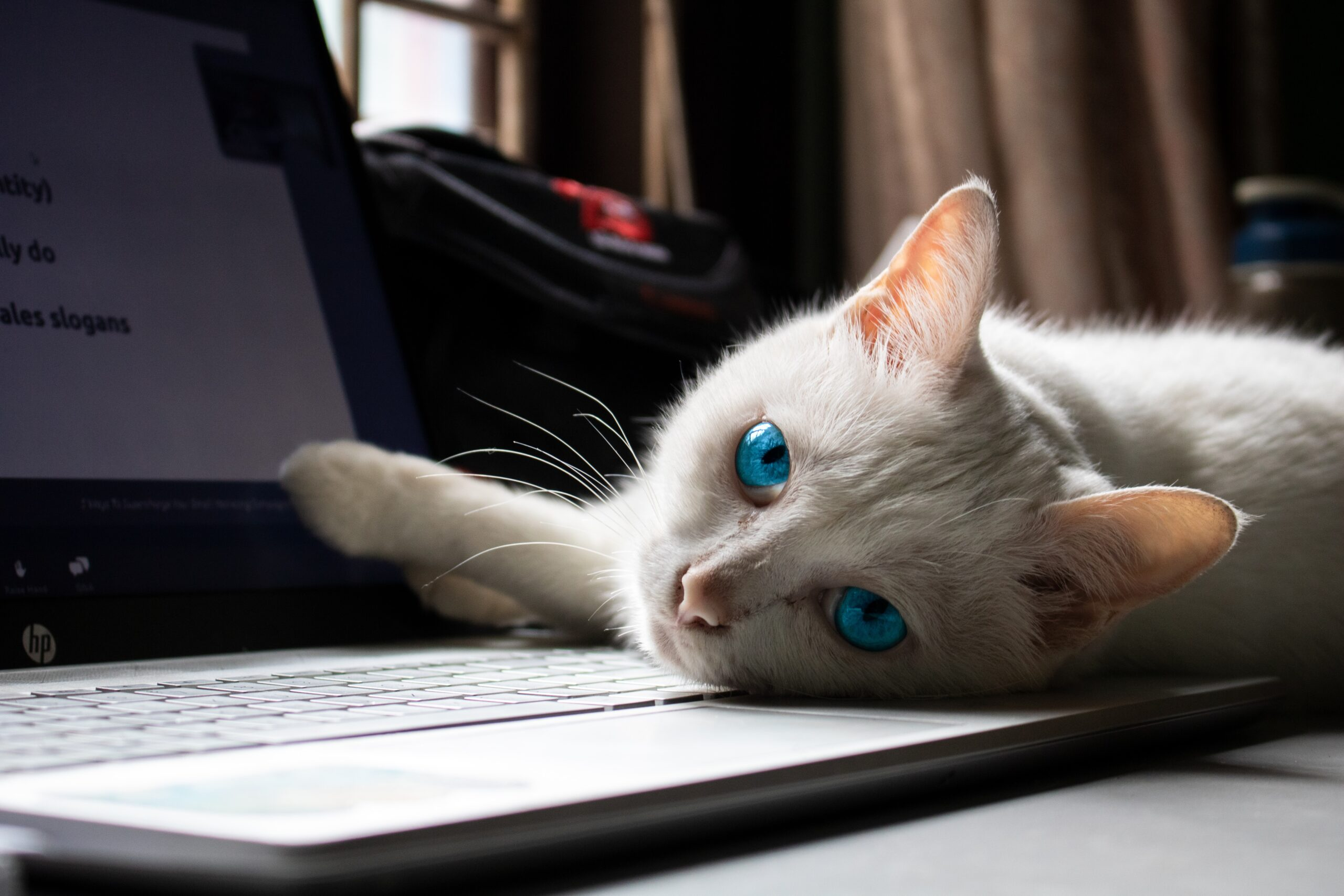 white cat lying on macbook pro