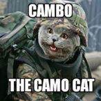 cambo-the-camo-cat